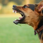 Advice on Dog Training For Aggressive Dogs