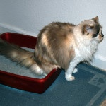Several Tips On How To Litter Train A Cat