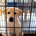 Dog Training Basics: Crate Training A Puppy At Night