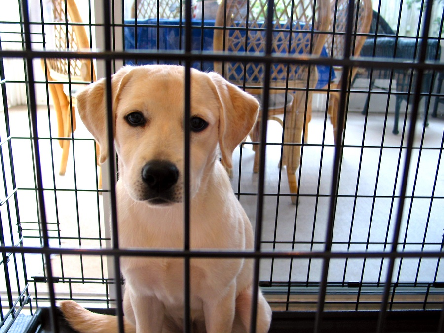 Puppy crate training crying night