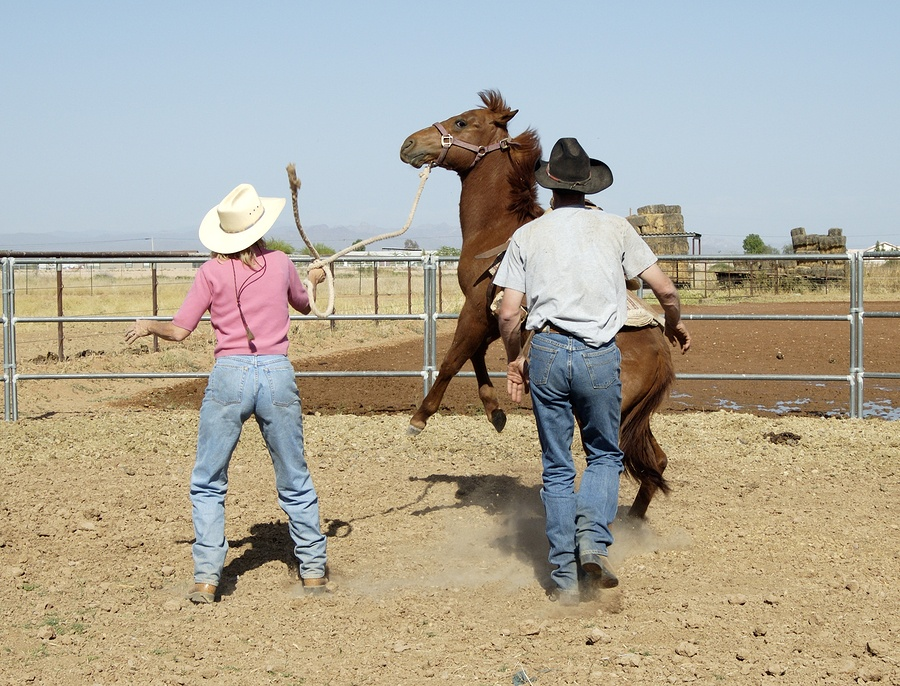 Breaking A Young Horse