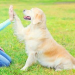 Tips For Helpful Pet Training Tricks