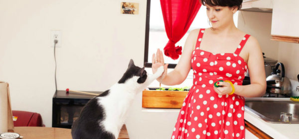 Click Click: Training Our Cats With Positive Reinforcement!