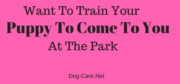 Want to Train Your Puppy to Come to You at the Park – Dog-Care