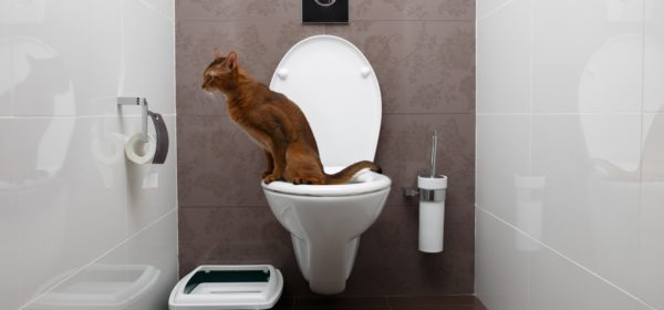 You can train your cat to use the toilet. Just don't expect it to flush.