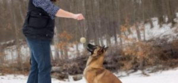 The Death Of Dog Training – The Driven Dog