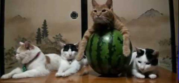 The Most Well Trained Cats Ever ?