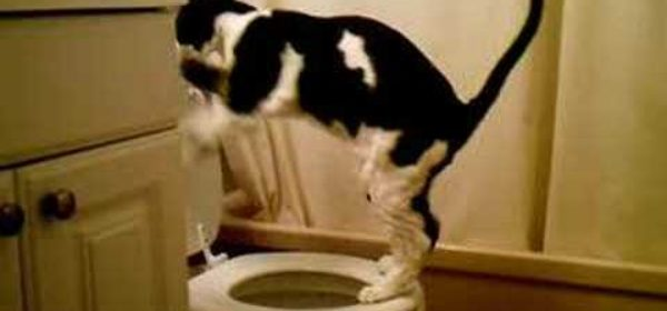 My Cat Peeing in the Toilet!