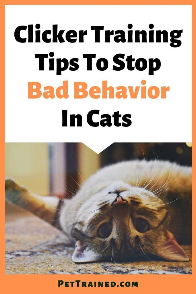 Cat Clicker Training Tips To Stop Bad Behavior from today