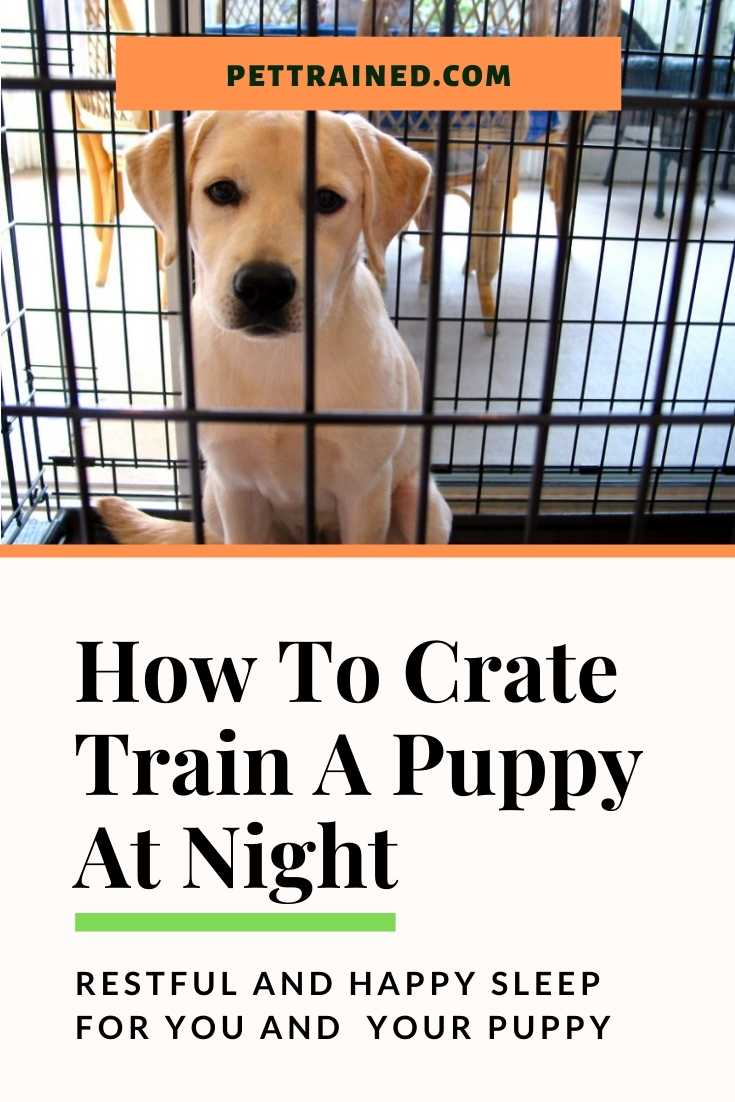 Crate Training A Puppy At Night Tips