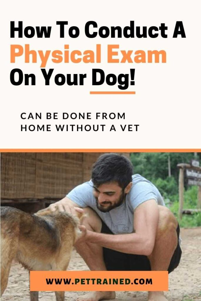 How To Do A Physical Exam On A Dog Anywhere