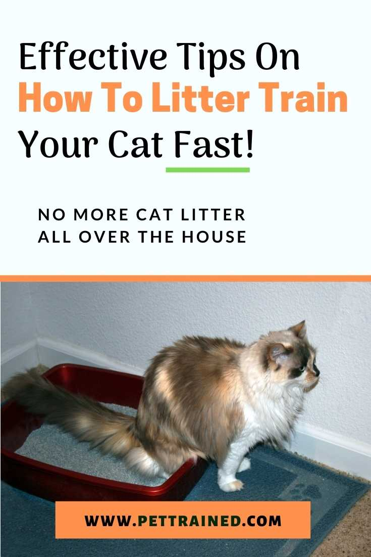 How to litter train a cat quickly