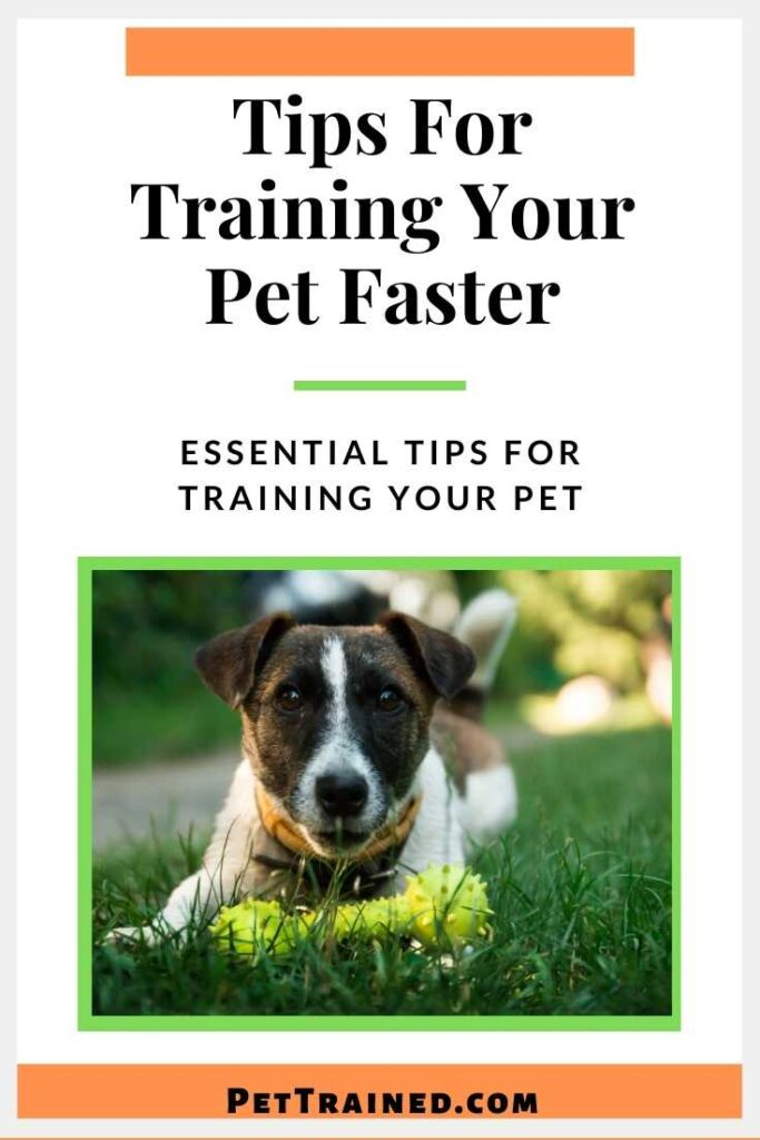 How to train a pet faster