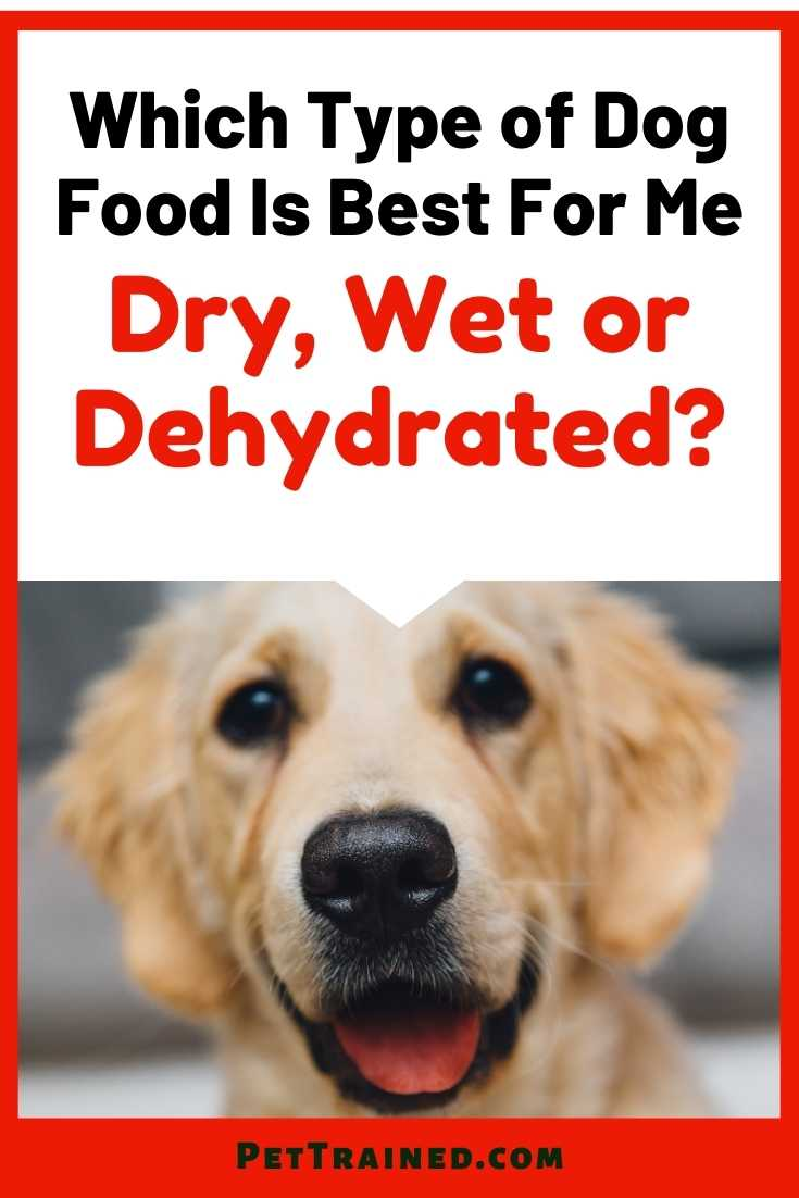 Which Type of Dog Food Is Best Dry Wet