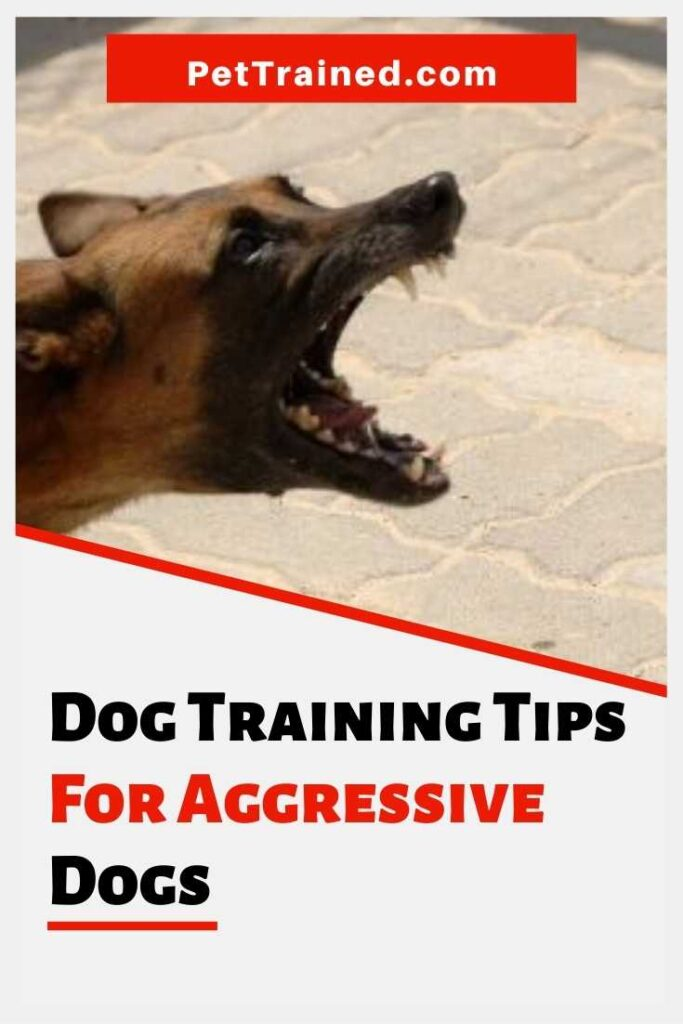 dog training tips on how to train an aggressive dog