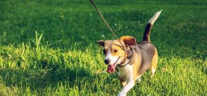 Hot Weather Tips For Dogs