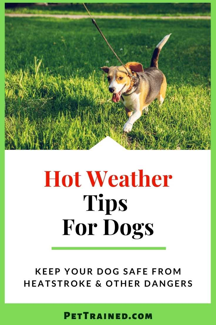 Hot weather tips for dogs and puppies