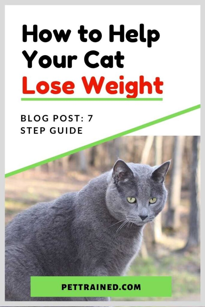 How to Help Your Cat Lose Weight in seven steps