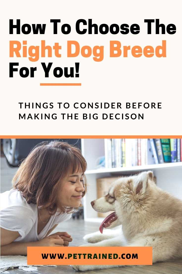 How to choose the right dog breed for you fast