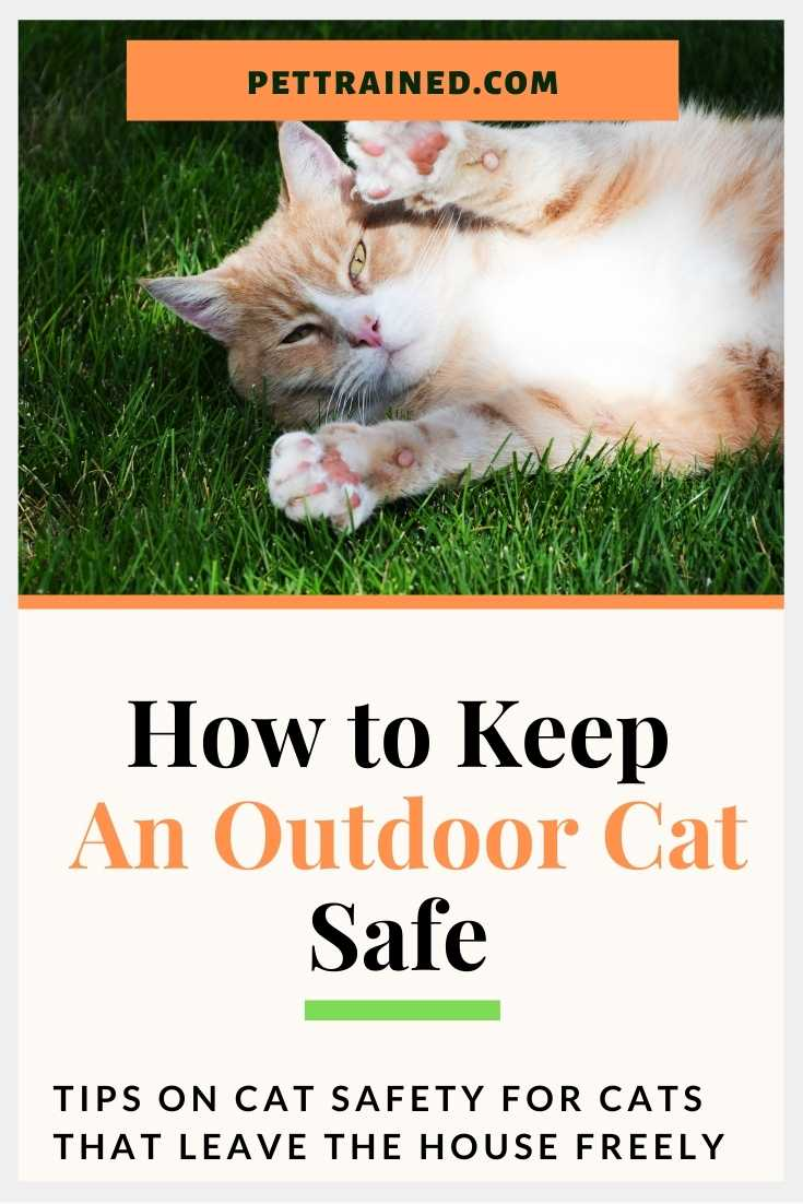 How to keep an outdoor cat safe from danger