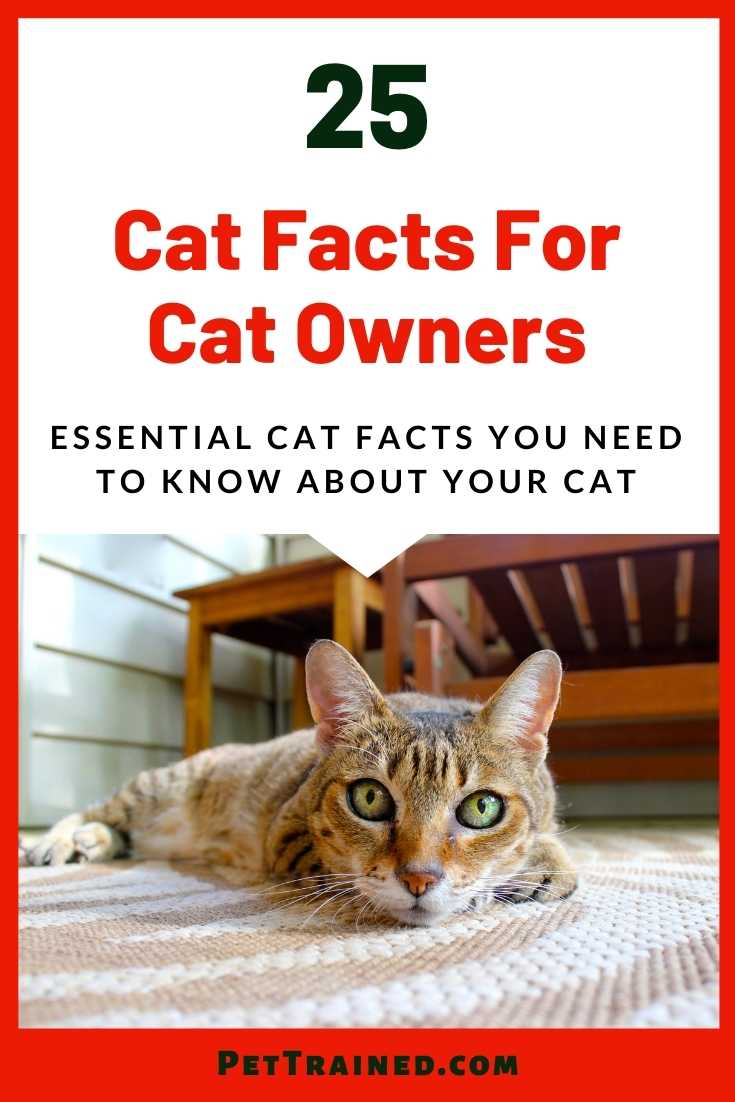 cat facts for cat owners who love cats