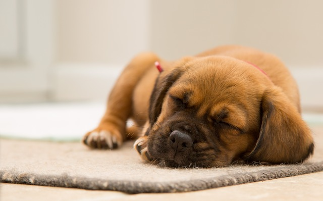 How To Calm A Restless Dog At Night