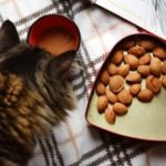 best quality affordable dry cat food