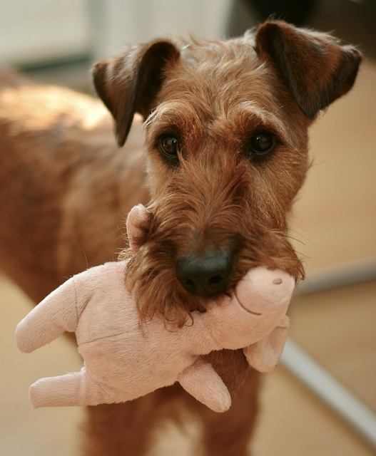 Calm your dog with a toy