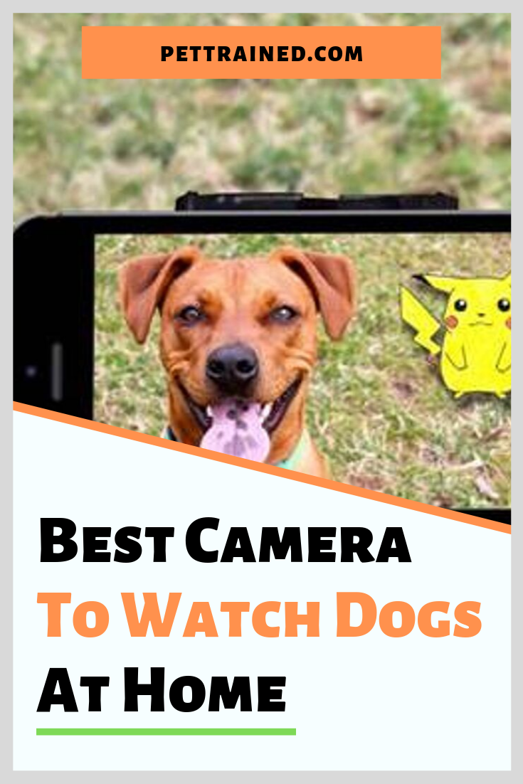 Looking for a dog camera? It can be a lot of fun to watch your dogs from wherever you are. Get the best camera to watch dogs at home, talk to your dogs, and even feed your dogs treats. See our highly recommended list of the best quality and affordable pet cameras here with a variety of functions so you can pick what is most important to you. #Dogcamera #pets #petscamera #petsproducts #securitycamera #dogmonitor www.pettrained.com