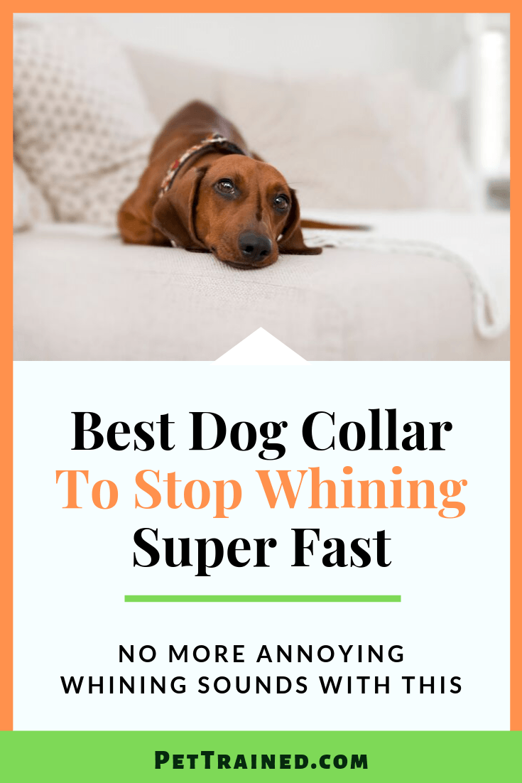 Whining dogs can be quite frustrating. Punishing them doesn\'t work. You will only hurt your dog and your puppy or dog will not know why you decided to hurt them. Using the right dog collar can stop dog whining fast. Here is a list of the best dog collars to stop whining. #cryingdog #dog #doganxiety #dognoise #howling #whining See more on www.Pettrained.com