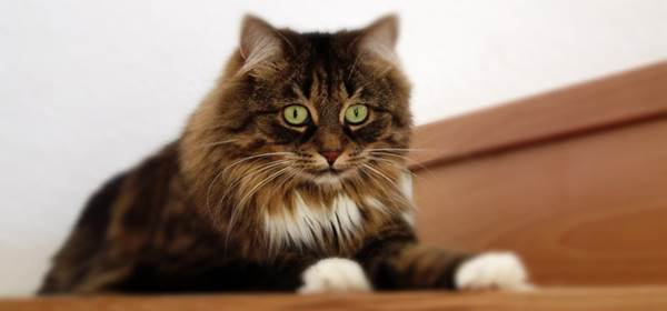 Best cat brush for long haired cats