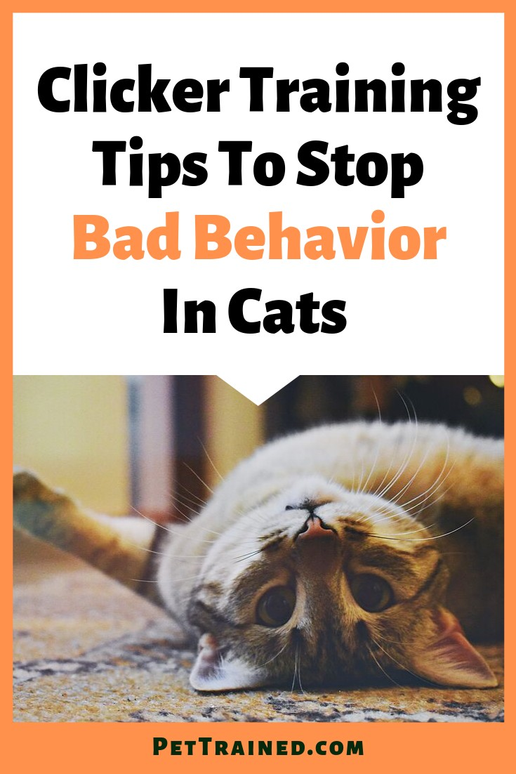 Is your cat acting out? www.PetTrained.com. Clicker training your cats to stop bad behavior is quite effective and easy when you follow the right guidelines. You can even learn how to teach your cats tricks using a clicker, in addition to solving any behavior problems. Read on to learn more. #cat #clickertraining #clicker #TrainaCat #kitten #trainwithclicker