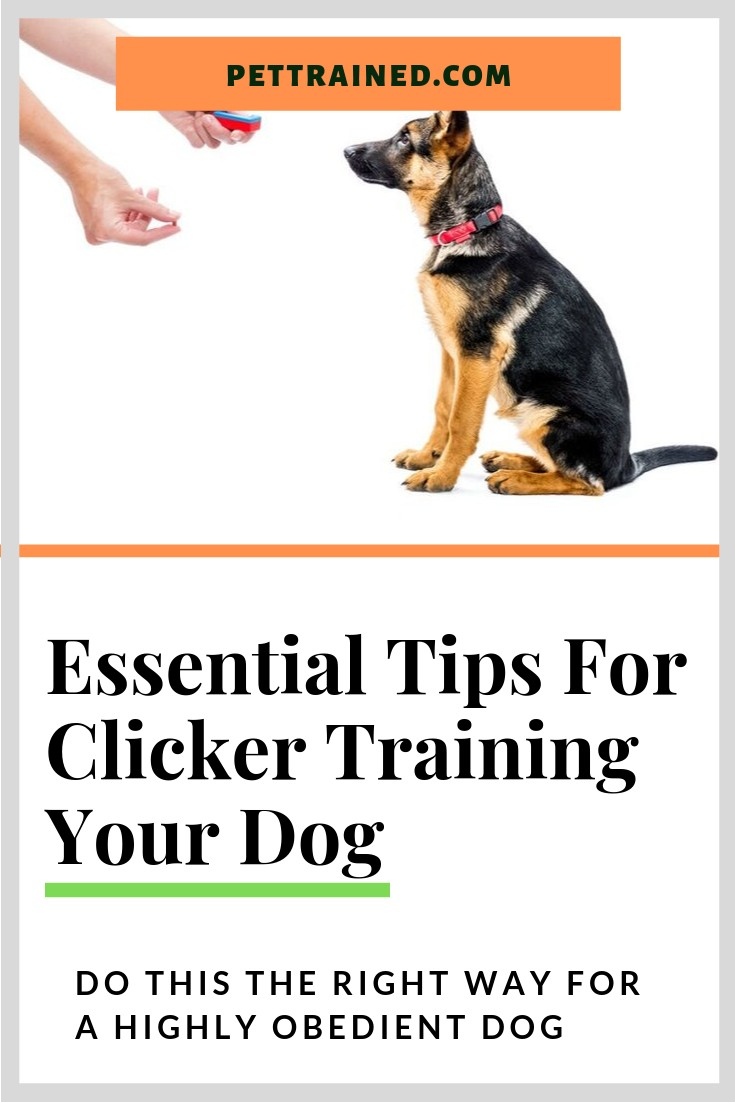 Get the secret of clicker training for dogs here. www.pettrained.com Learn essential tips on training your dog using clickers and dog treats to stop your dog\'s bad behaviour from today. These quick tips are so easy that you can implement the methods right away. #clicker #dog #dogs #clickertraining #dogtraining #dogtreats #pet #Puppy