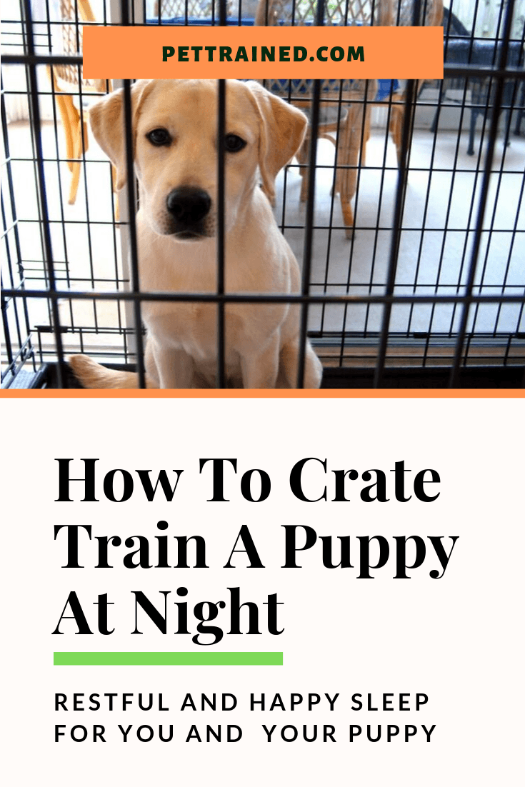 New puppies are full of energy. Crate training your puppy at night is essential so your puppy learns self-control and understand that night is a time of rest. proper crate training will ensure your puppy is well trained and happy withdrawing to the dog crate at night as a place of safety and joy. read more #cratetraining #housetraining #housebreaking #newpuppy #puppysleeptraining