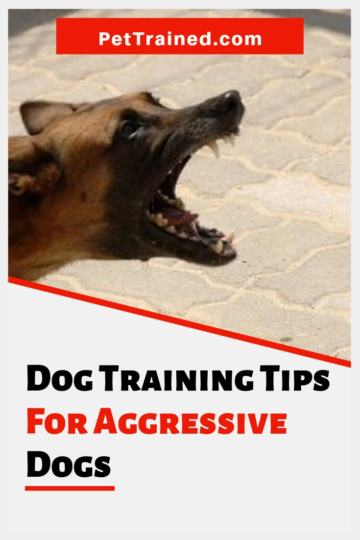 Dog training does not have to be impossible, and an aggressive dog can be changed with the right approach. www.pettrained.com You just need to follow the right steps that will make your dog understand that you are the boss and follow your instructions perfectly. Check out some dog obedience tips for aggressive dogs #dogaggression #dogtraining #InterdogAggression #puppytraining #dogs #puppy