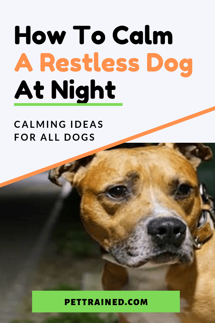 Having a restless dog can be stressful especially after a long work day. There are many causes of dog restlessness, dog anxiety, and even dog sleeplessness. Here are some tips on how to calm a restless dog at night that you can use right away so you and your lovely pet can rest happily at night.#agingdogs #dogExercise #doginsomnia #dogrestlessness #dogtraining #dogs #Separationanxiety www.pettrained.com