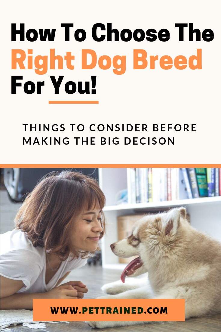How To Choose The Right Dog Breed For You