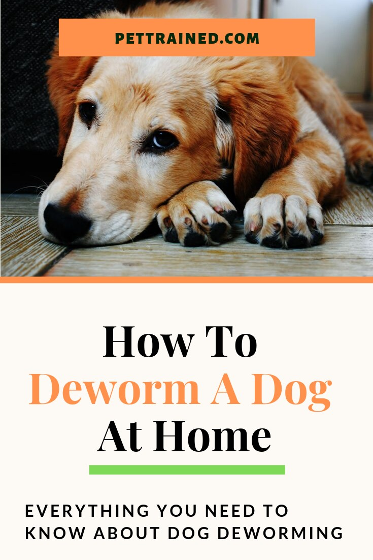 How To Deworm A Dog At Home