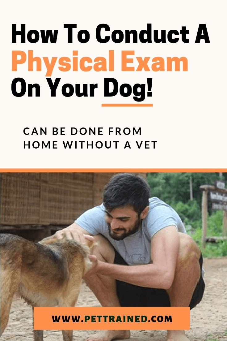 When you own a dog you are responsible for ensuring your pet is healthy, well-fed and happy. www.Pettrained.com. You have to be on top of health issues, observe changes in your dog\'s behavior, and regularly check and examine them physically to tell if something is wrong. See how to conduct a physical exam on your dog from home here.#doghealth #dog #puppy #doginfection #sickdog