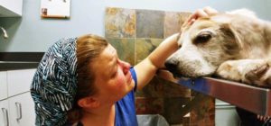 How To Help A Dog With Back Pain