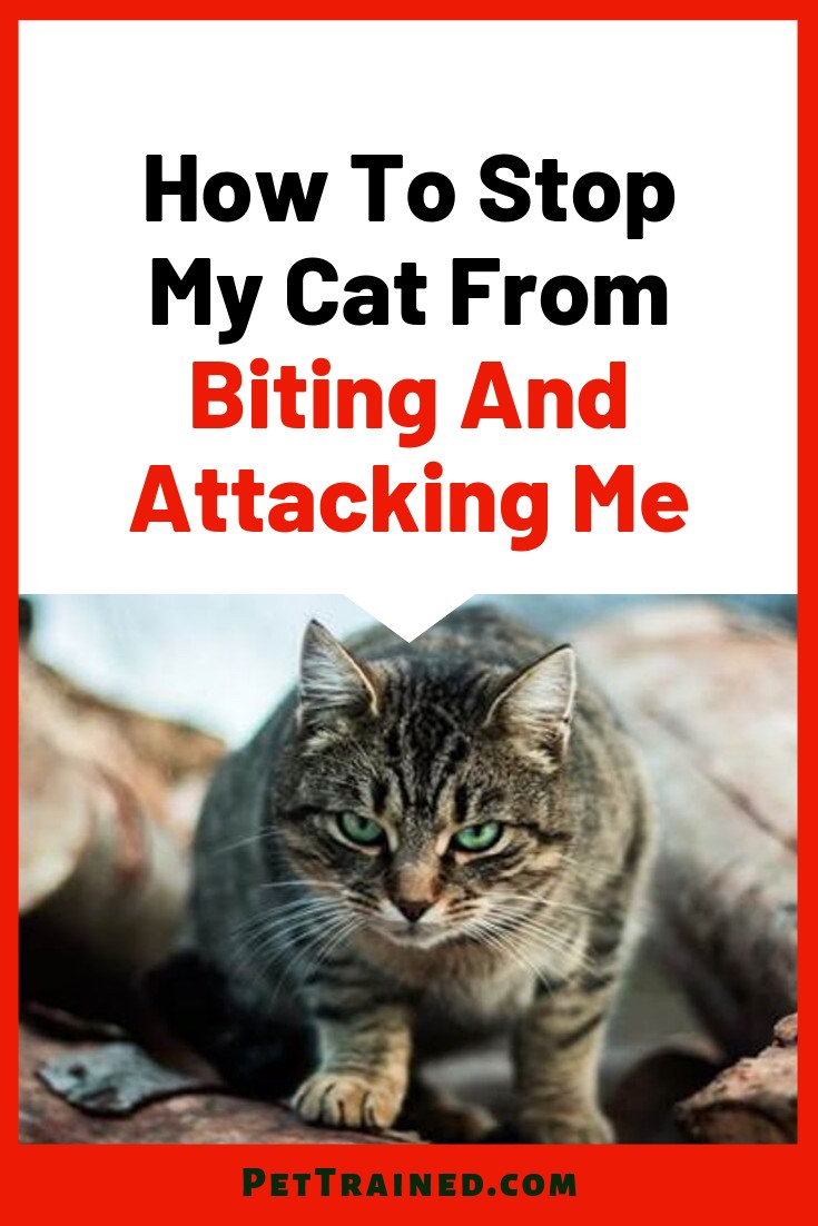 How To Stop My Cat From Biting And Attacking Me