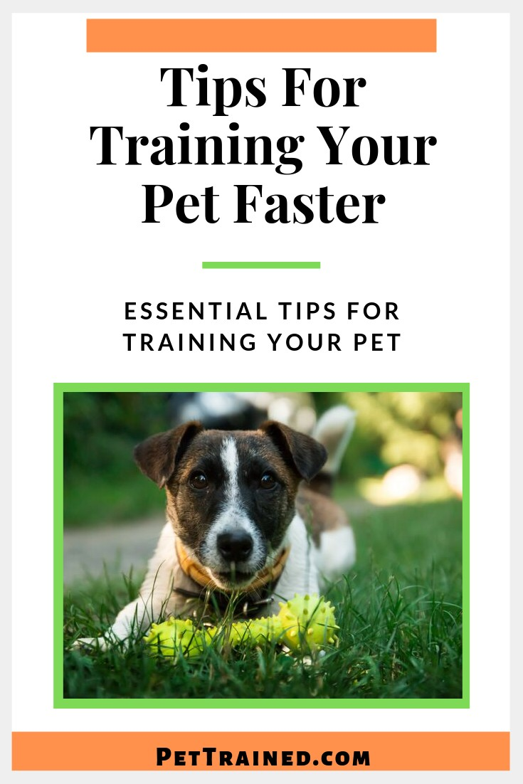 Tips for training your pet