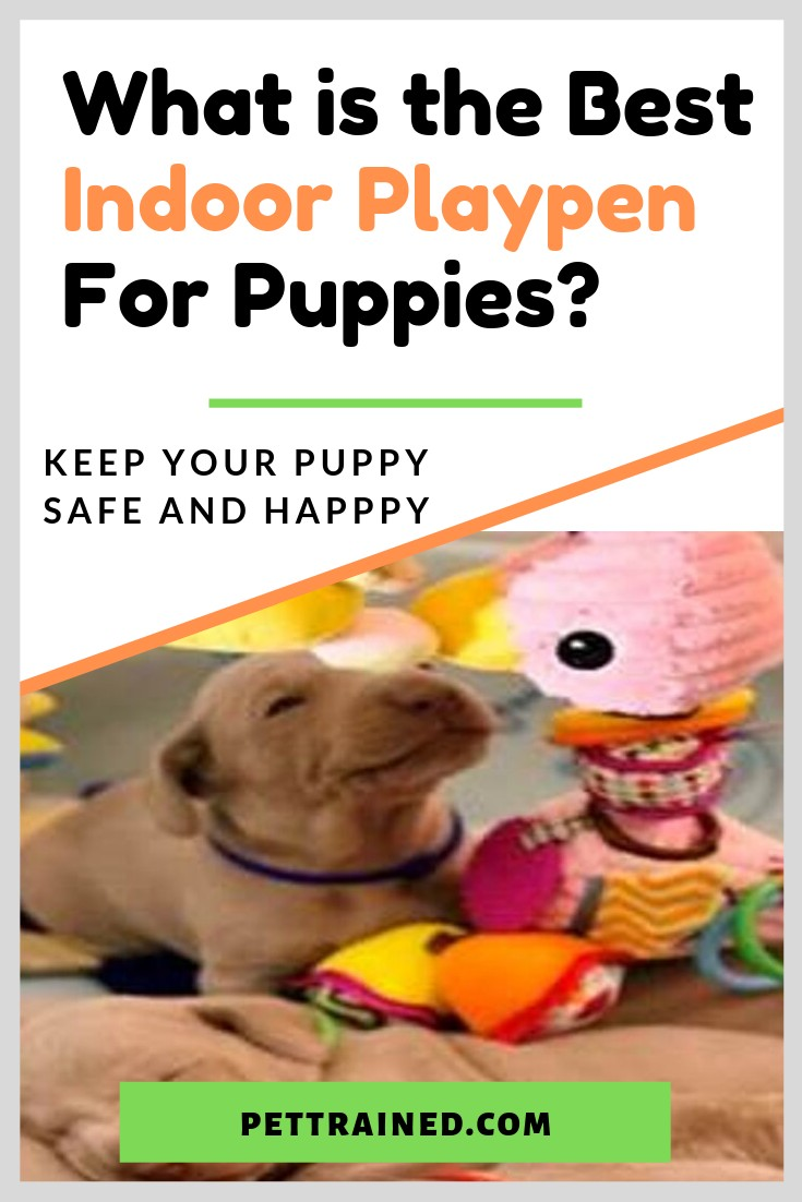 Best Indoor Playpen For Puppies
