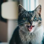 How To Get Rid Of Bad Breath In A Cat