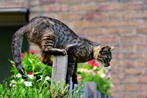 Secrets to keep cats out of the garden