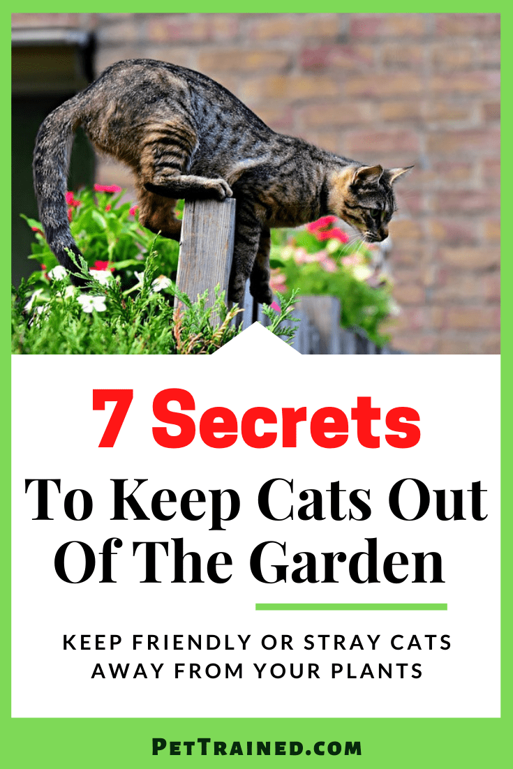7 Secrets To Keep Cats Out Of The Garden