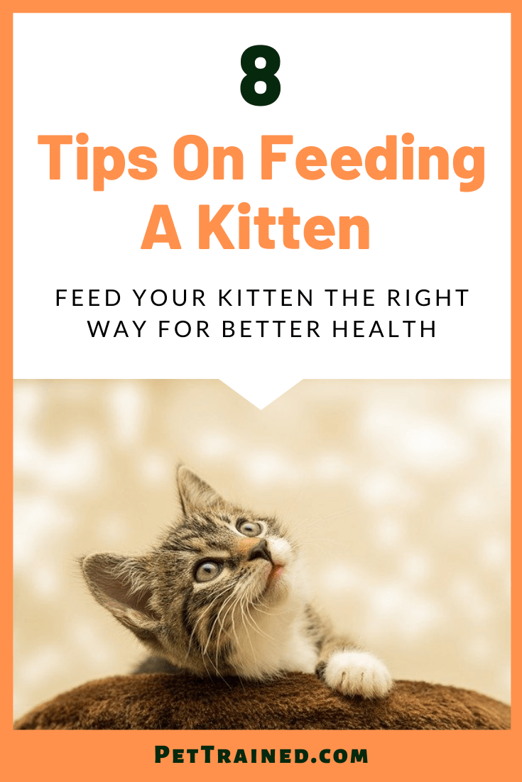 8 Tips on Feeding A Kitten For Great Health