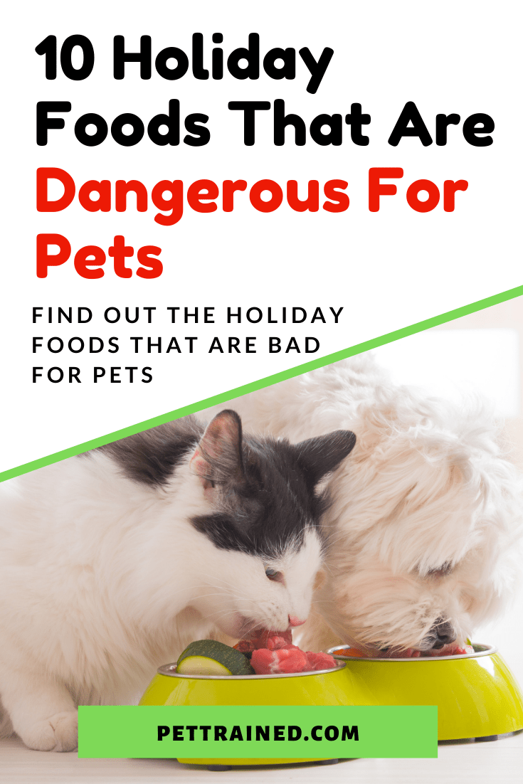 Holiday Foods That Are Dangerous For Pets dogs cats