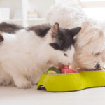 10 Holiday Foods That Are Dangerous For Pets