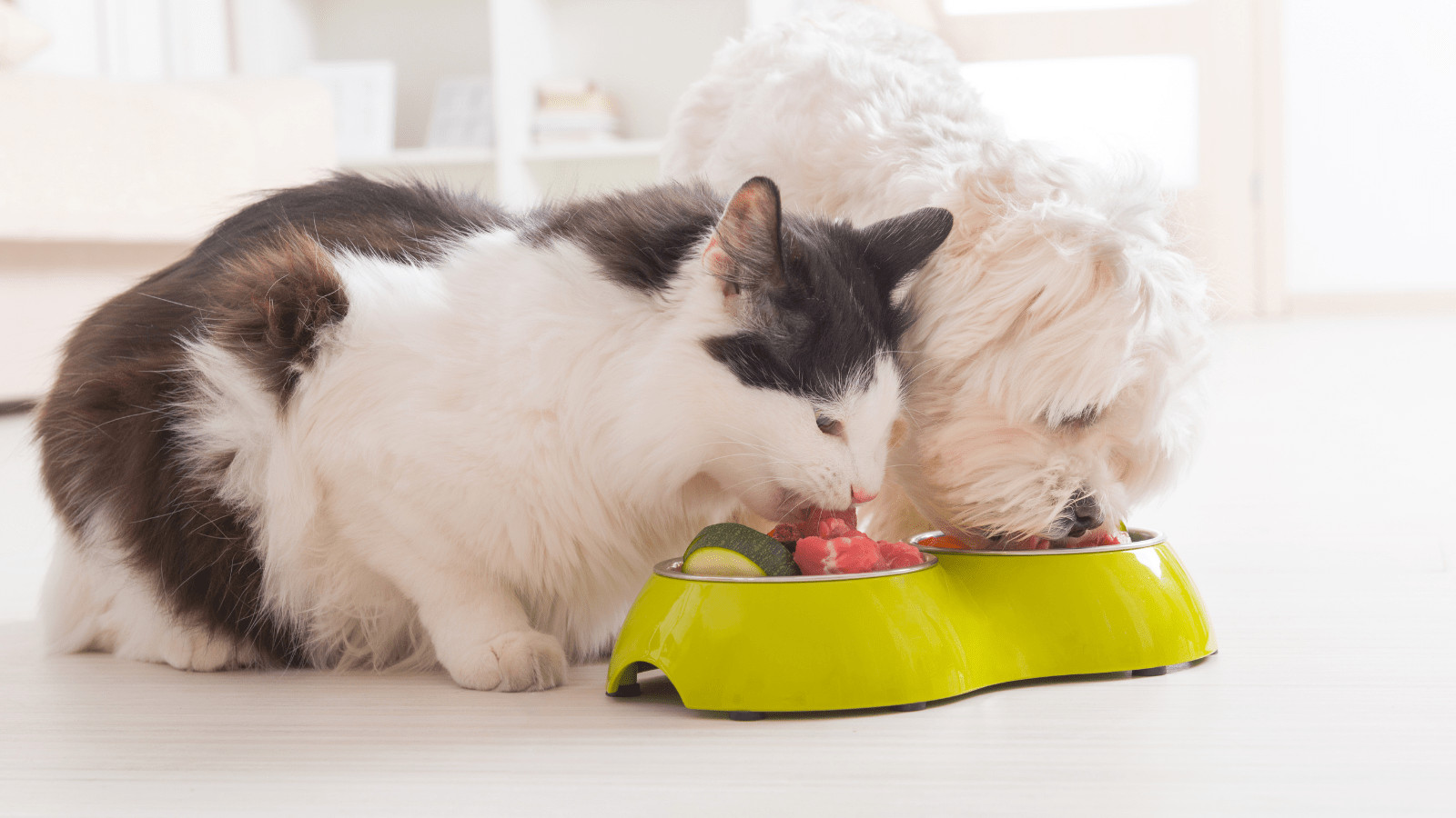 Holiday Foods That Are Dangerous For Pets like dogs and cats